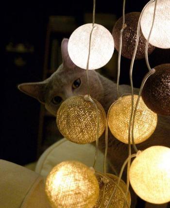 Zdjęcie: Koty Mamroty